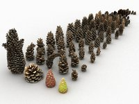 3D mega conifer cone pack model
