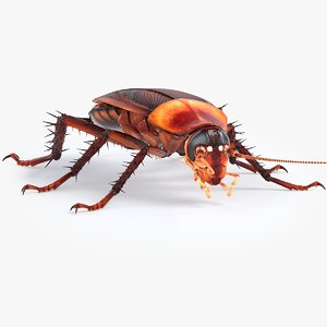 3D model realistic cockroach