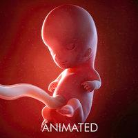 3D fetus week 10 model