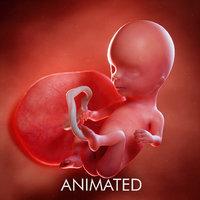 Fetus Week 14