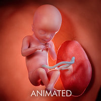 Fetus Week 18