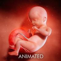 3D fetus week 21