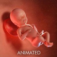 fetus week model