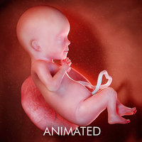 fetus week 26 3D