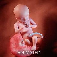 3D fetus week 28 model