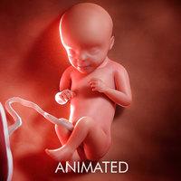 3D model fetus week 29