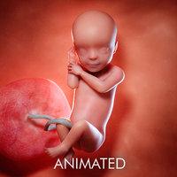 fetus week 30 3D