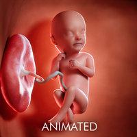 3D fetus week 33