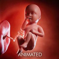 fetus week 34 3D model