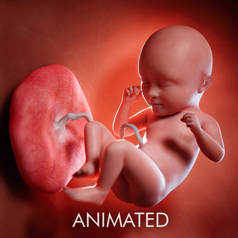 fetus week 35 3D