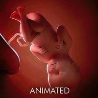 fetus week 37 3D model