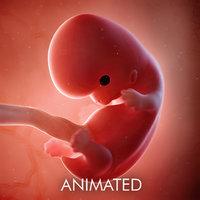 Fetus Week 8