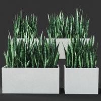 sansevieria 3D model