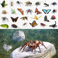 Insects Big 3D Models Collection 2