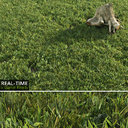 Real-time Lawn Grass