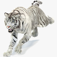 white sumatran tiger fur 3D model