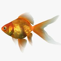 ryukin goldfish scanline model