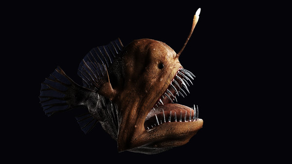 deepsea anglerfish 3D model