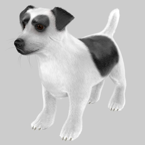jack russell terrier model