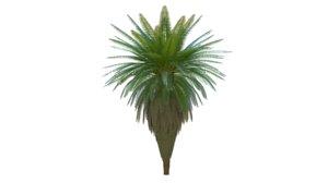 palm tree natural 3D model