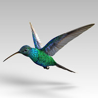 3D hummingbird kolibri animal