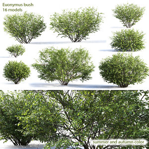 3D euonymus 1 model