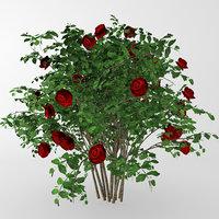bush red roses 3D model
