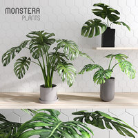 monstera plants 3D model