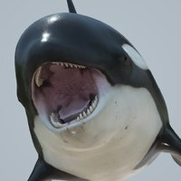 Killer whale rigged and animated for Cinema 4d