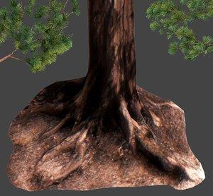3D sequoia pine tree