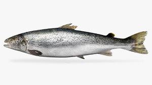 3D salmon king