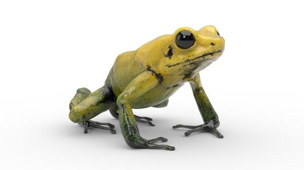 3D golden poison dart frog model