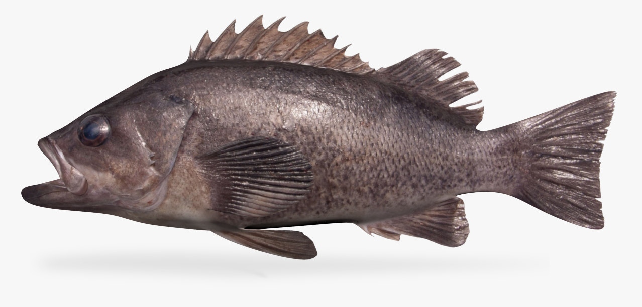 3D model black rockfish