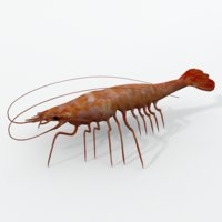 3D red prawns