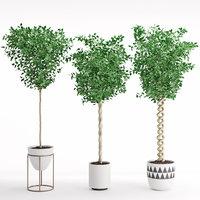 3D model houseplant 31