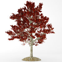 3D red maple