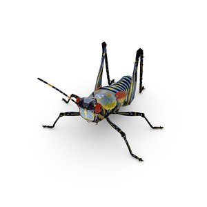 elegant grasshopper zonocerus elegans 3D