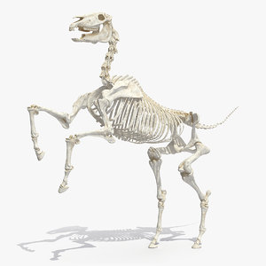 horse skeleton rigged 3D model