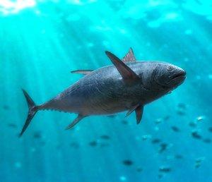3D model tuna animation