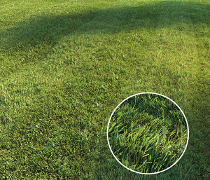 3D mowed lawn grass model