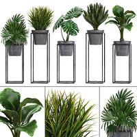 loft exotic plants 3D model