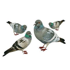 3D flock birds