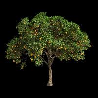 3D model fruit tree orange