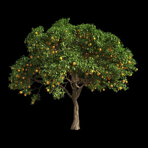 3D model fruit tree orange