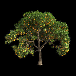 fruit tree orange model