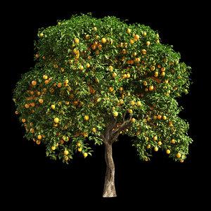 fruit tree orange 3D