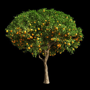 fruit tree orange 3D model