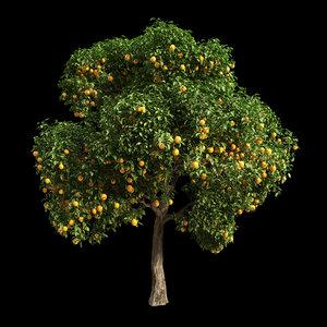 3D fruit tree orange model