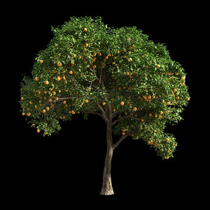 fruit tree orange 1 3D model