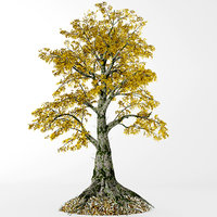 3D sassafras tree model